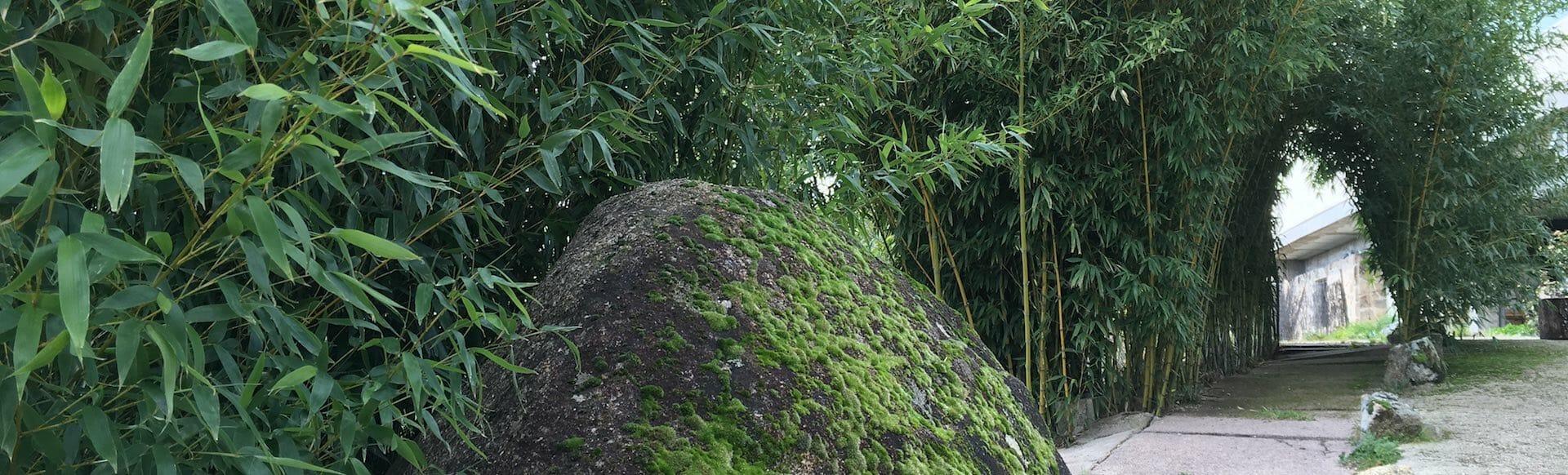 bambu en La Canela